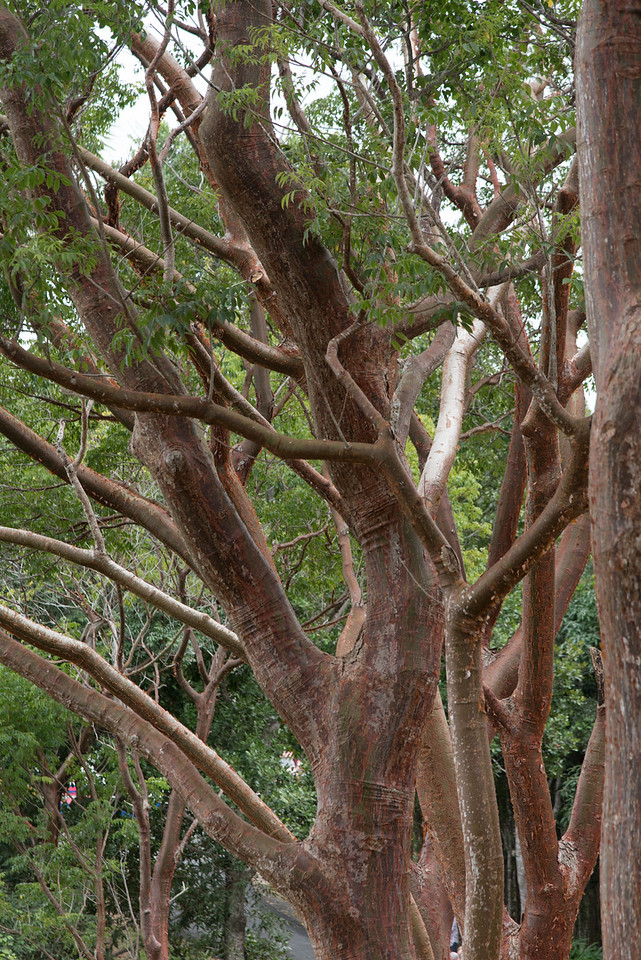 Tourist Tree