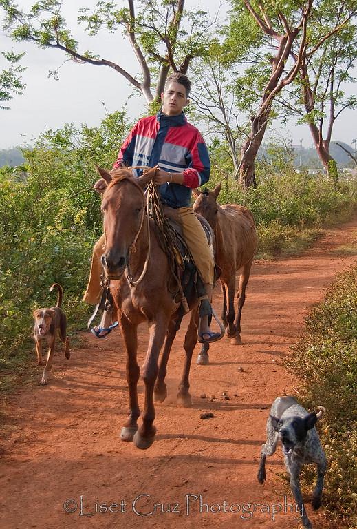 Dogs watch their owner in Viñales, Pinar del Rio, Cuba.
