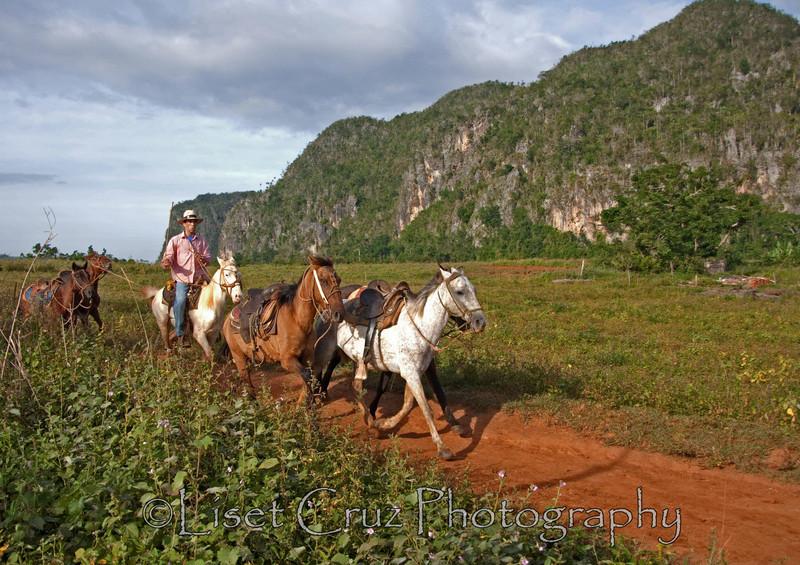 A cowboy in Viñales, Pinar del Rio, Cuba.