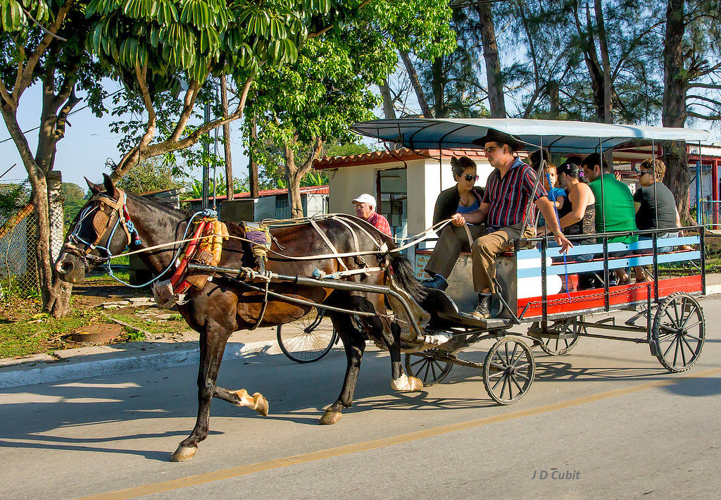 Morning commute near Santa Clara, Cuba.  These horse-drawn wagons were common in suburban parts of Cuba.