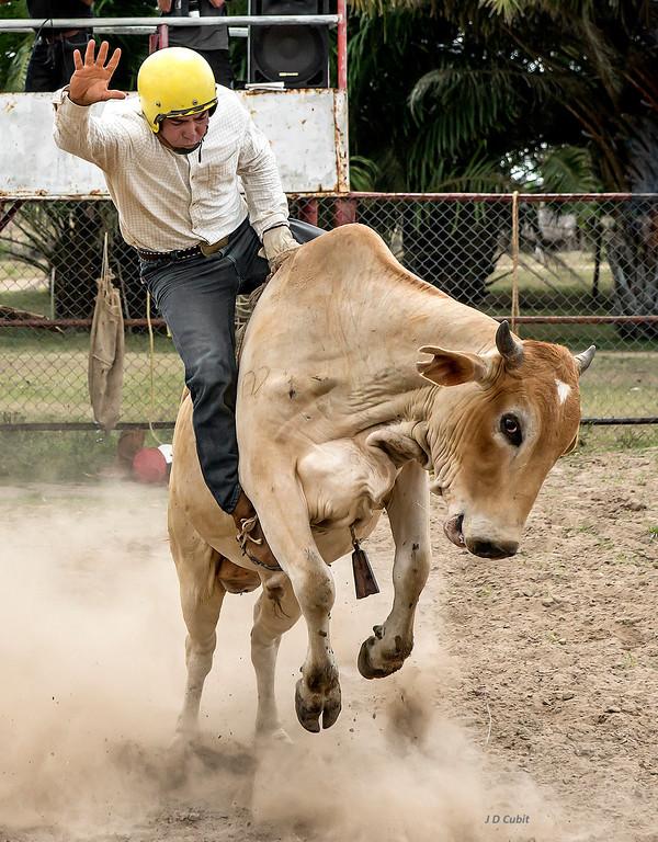 Bull riding at the King Ranch rodeo