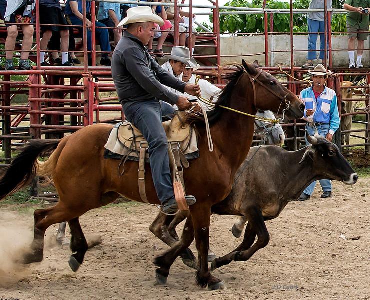 King Ranch rodeo, Cuba