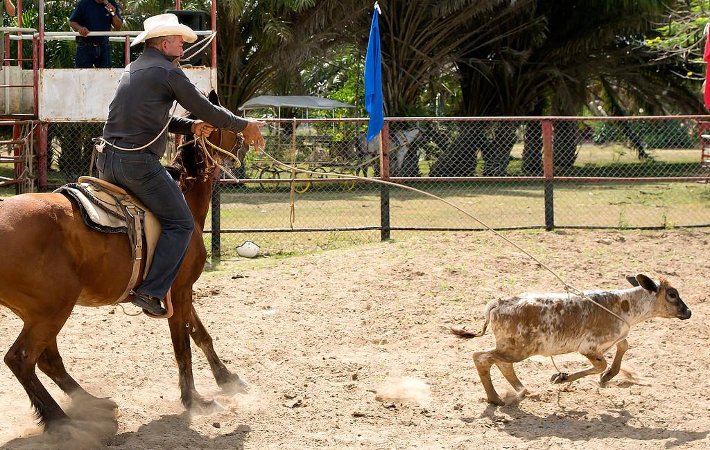 Calf roping, King Ranch rodeo, Cuba