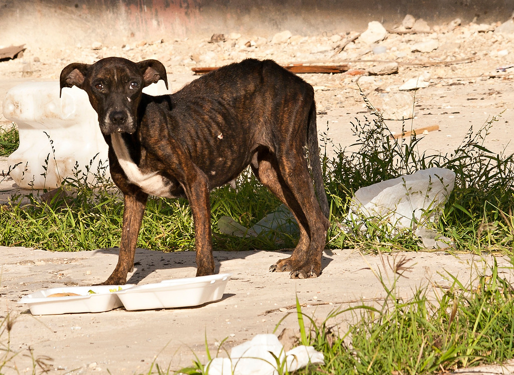 The starving strays broke my heart.  We started keeping parts of our meals so we could feed poor girls like her.