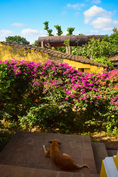 A dog lazes away the afternoon on a staircase landing of the Hacienda Ingenios. It appears to be an old locomotive boiler serving as a water tank beyond that yellow house.