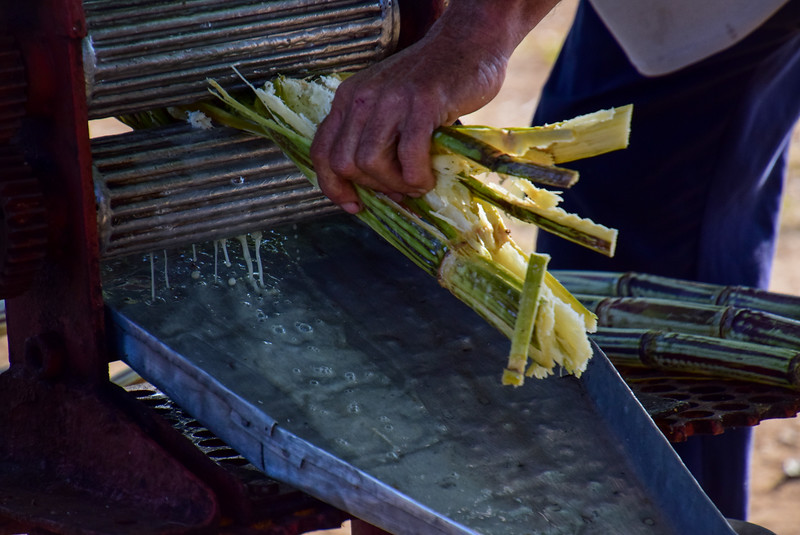 Stalks of sugar cane being pressed to release the sweet juice.