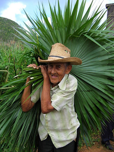 Cuban farmer