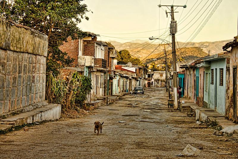 Dog on Trinidad Street
