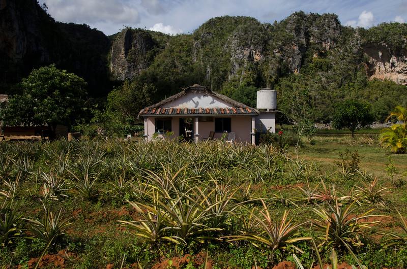 vinaleshouse.jpg