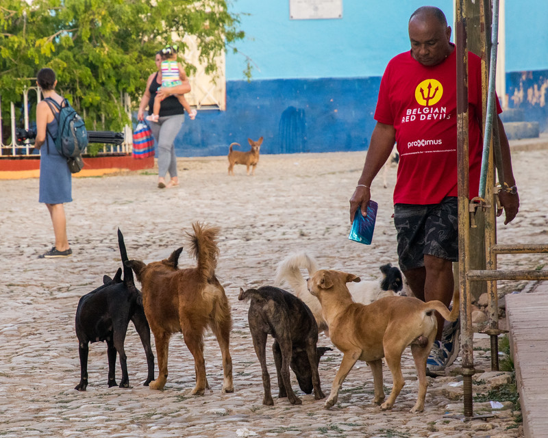 Dogs roamed freely everywhere!