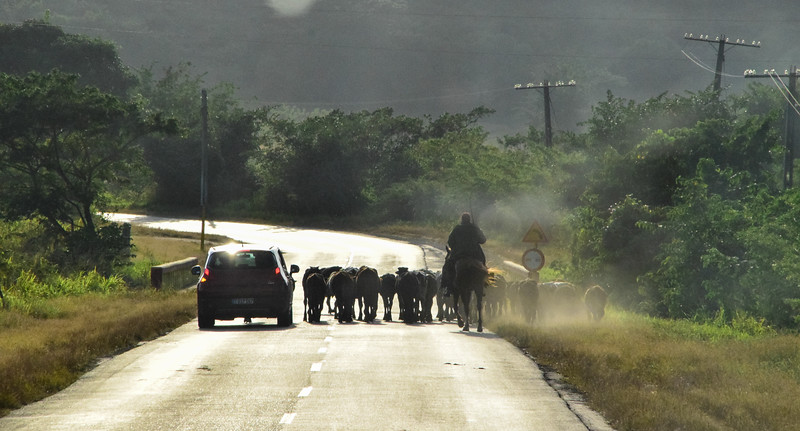 Typical scene as photographed from our tour bus traveling between Cienfuegos and Trinidad.