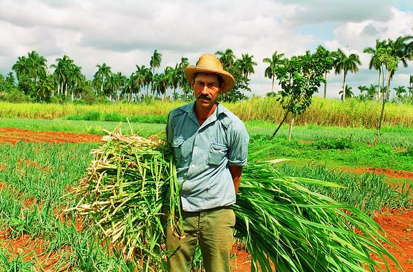 A farmer in San Antonio de los Baños, Cuba.
