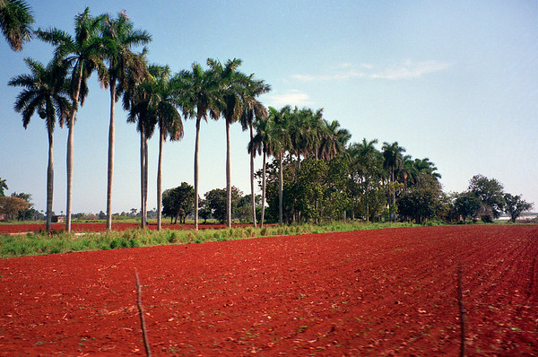 Fertile soil in Cuba.