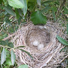 the nest Rikki Tikki found ;)