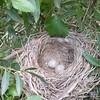 the nest Rikki Tikki found ;)