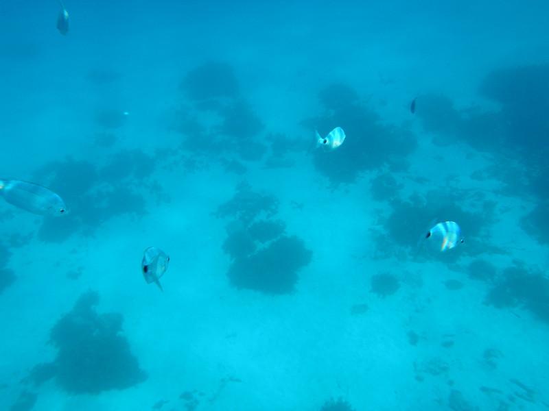 Underwater pic....Comino