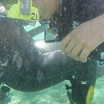 VIDEO: Time to follow Tom on his first scuba dive.....