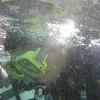 Captur on his first scuba dive!!
