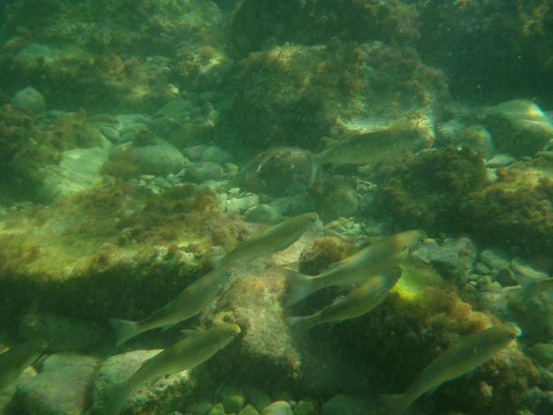 Life underwater - the diving reef pool
