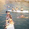 Cubs swimming with their 'surf boards'
