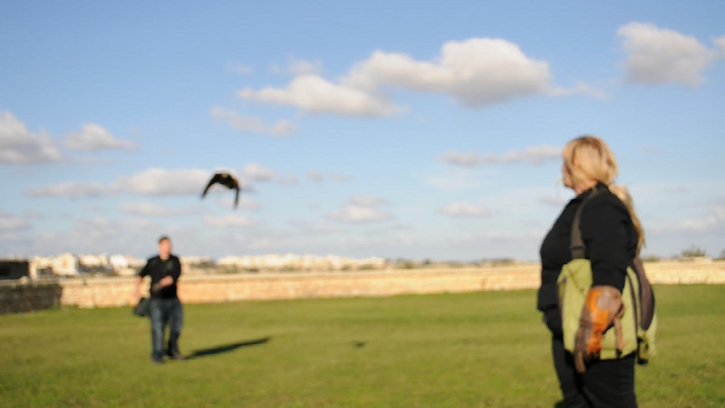 VIDEO 3: Mia and Hannah attempt to grab their meat whilst flying....let's see if they manage....