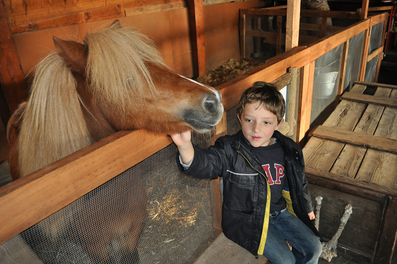 Julian petting the pony