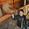 Julian petting the pony