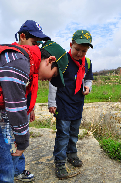 David, Matthias and Noah find an insect and watch it for a couple minutes to see how it lives in nature