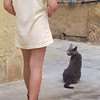 Photo taken from collection of Cub Ben - A resident cat in Cittadella looks as a tourist passes along