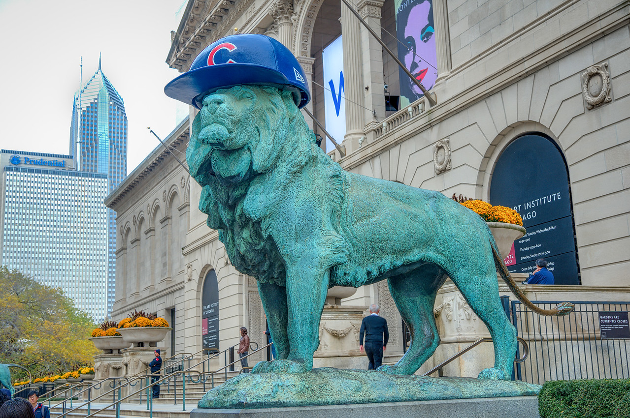Cubs Lion - Take 1 (1 of 1)