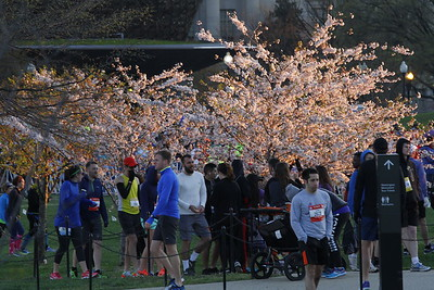 2017 Credit Union Cherry Blossom