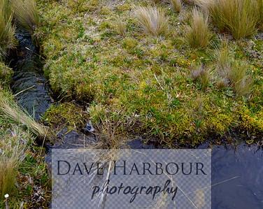 5-20-15 - Cuenca Fly Fishing Club - Andean Mountain Stream - Roque - Rancho Prado - El Cajas by Dave Harbour
