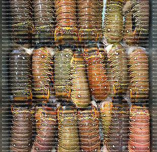 rows of lobster tails displayed on ice waiting to be sold