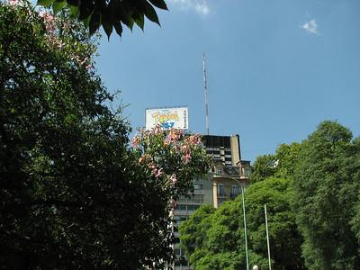 Ceiba speciosa, formerly Chorisia speciosa in Buenos Aires