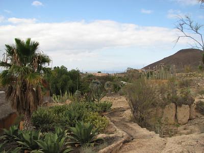 Agave spec. (Parque Exoticos, the Cactus and Animal Park, Los Cristianos)