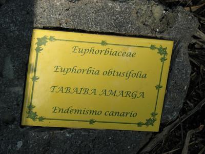 (Parque del Drago, Icod de los Vinos)