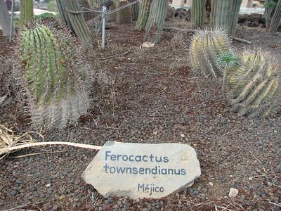 Ferocactus townsendianus (Parque Exoticos, the Cactus and Animal Park, Los Cristianos)