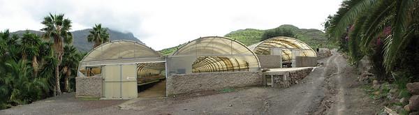 Propagation houses (Cactualdea)