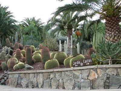 Echinocactus grusonii and Ferocactus (Cactualdea, a garden in the western part of Gran Canaria)
