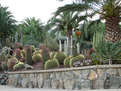 Echinocactus grusonii and Ferocactus (Cactualdea, a garden in the western part of Gran Canaria)