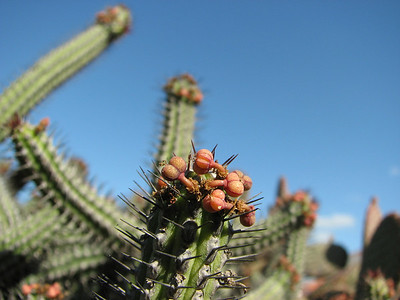 Plants at Dunas Golf resort