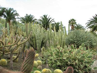 Aloe dichotoma and cacti (Cactualdea)