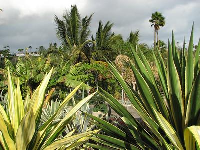 Parque Botánico de Maspalomas