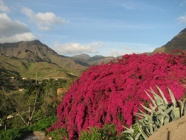Gardens and cultivated plants in Gran Canaria