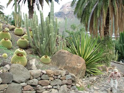 Echinocactus grusonii (Cactualdea)
