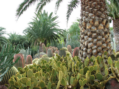 Cactualdea, a garden in the western part of the island