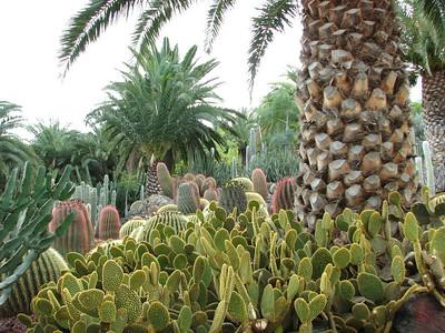 Cactualdea, a garden in the western part of the island
