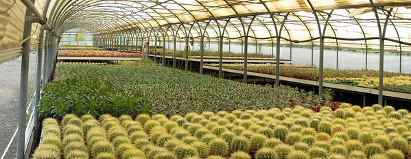 Propagation houses with Echinocactus grusonii (Cactualdea)