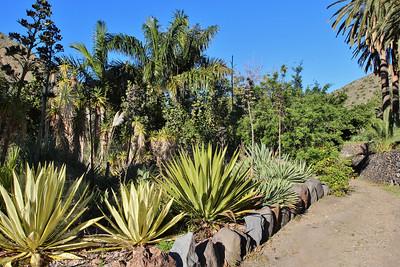 (El Jardín Botánico del Descubrimiento de Vallehermoso, just north of Vallehermoso)