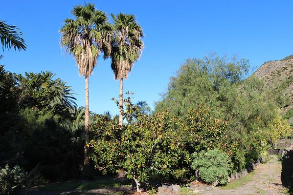 La Gomera: El Jardín Botánico del Descubrimiento de Vallehermoso and the garden at Centro de Visitantes de Juego de Bolas